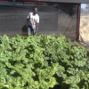 Namport funds orphanage's greenhouse project