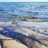 Oil spill clean-up begins